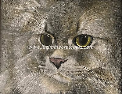 $60.00 OFF - Pets Coon Cat Kitten Dog ORIGINAL Scratchboard Art 8x10x1/8 by LVZ