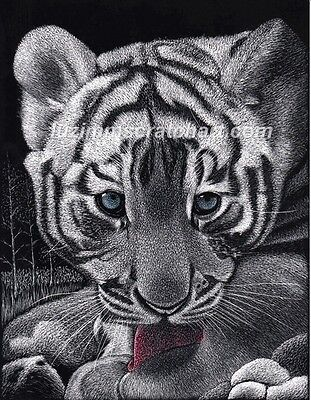 $30.00OFF - Animal Lion WhiteTiger Cub ORIGINAL Scratchboard 8.5x11in  by LVZimm