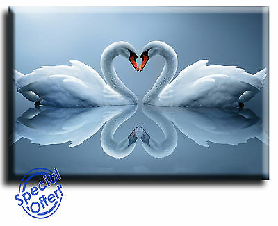Wall Art Canvas Picture Print of Love Heart Swan  Framed  Ready to Hang