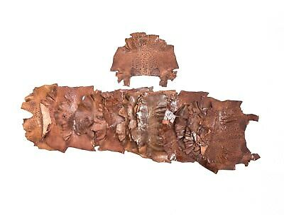 """New Bufo Marinus Cane Toad Skin Leather Collectible Taxidermy brown Tan 6"""""""
