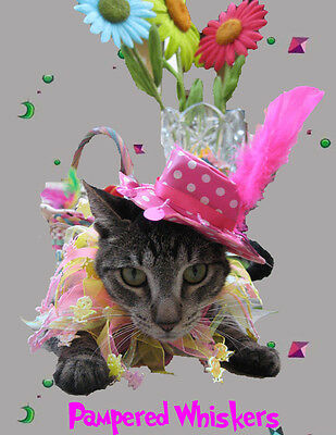 Cat Birthday Hat and Party Collar- Cat_Dog Easter party collar and hat