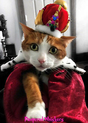 Cat_Dog Birthday Crown - Cat_Dog Crown and tippet -The Jewels for cats and dogs