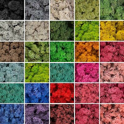Moss - Norwegian Reindeer - Natural Preserved Dried - 20 Colours - Choose Weight