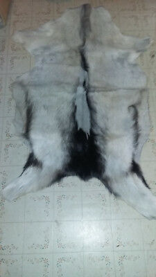 Nice Size Goat Skin With Hair Powwow Crafts Pouches Table Cover Other Crafters