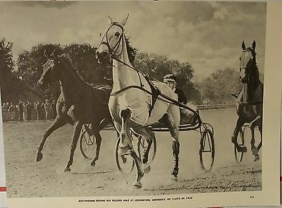 Vintage Greyhound Cart Record Racehorse Horse George Ford Morris 1952 Print