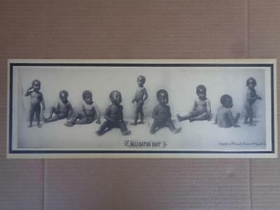 Black Americana Alligator Print Poster Knoxville Tn Dated 1897