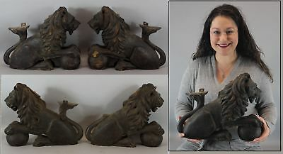 4 Large Antique Carved Oak, African Lion Carvings, Architectural Fragments, NR