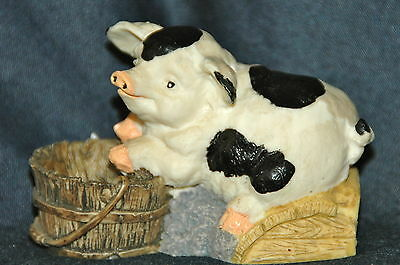 """Black & White Piggy with """"Who Me?"""" look when caught eating from wooden bucket"""