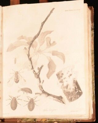 1820-1824 5vols Transactions of the Horticultural Society of London B W Plates