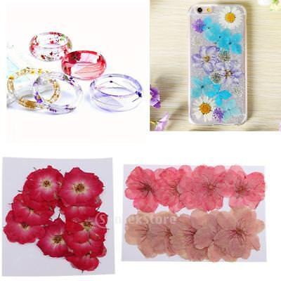20x Pressed Dried Flowers For DIY Phone Case, Bookmark, Resin Jewelry Crafts