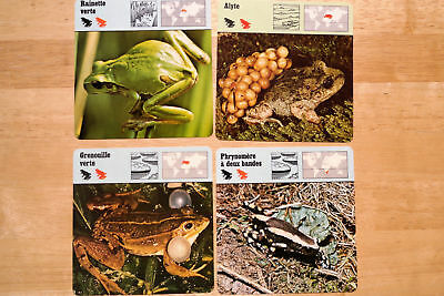 20 Safari Cards Amphibian- and  Reptile- Type Animals Salamander Frog (French)