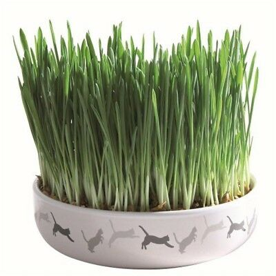 Trixie 42341 ceramic Cat Grass - Ceramic Bowl