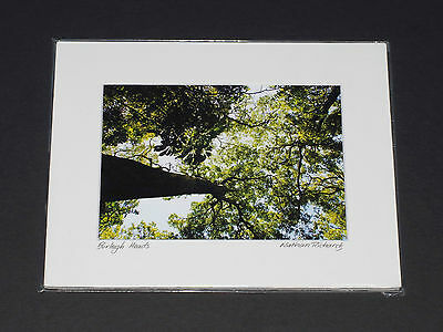 Photographic print of BURLEIGH HEADS rainforest by photographer Nathan Richards
