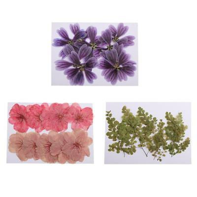 30 Pcs Beautiful Pressed Flowers Mixed Natural Flower for Scrapbooking DIY