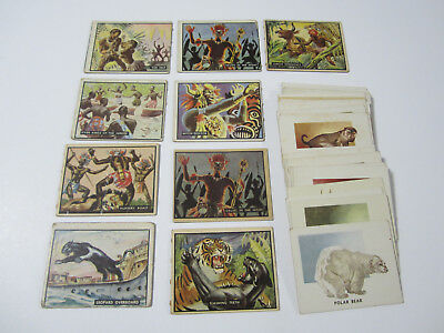 1951 - Topps - Animals Of The World - Trading Cards - Lot 21 Cards -Original