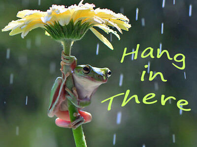 CUTE FROG HANG in There Inspirational Quote refrigerator locker toolbox  magnet