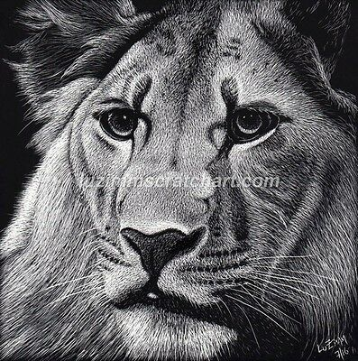 Wildlife Tiger Lion ORIGINAL signed Scratchboard Art 6x6x1/8in  by LuZimm