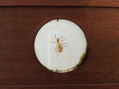 Large 7x3 Victorian Microscope Slide Wood Mounted and Ant / Insect / Darwin