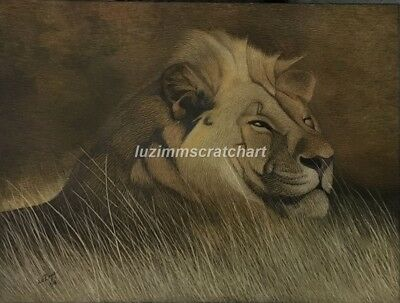 "Wildlife Lion Tiger ORIGINAL signed Scratchboard Art 12""x16""x1/8"" by LuZimm"