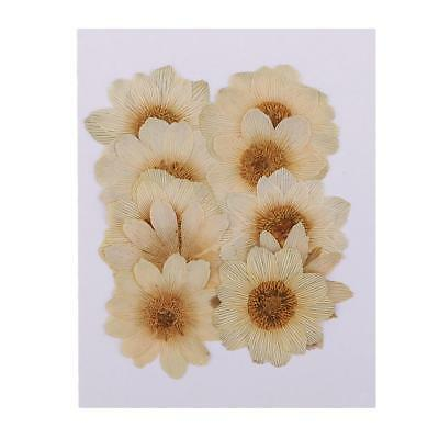 10 Pieces Natural Dried Pressed Ice Flowers DIY Embellishment for Phone Case