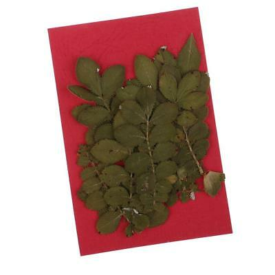 10pcs Pressed Real Dried Flowers Dried Leaves for Art Craft Jewelry Making