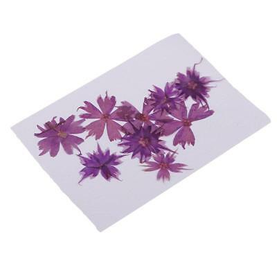 10pcs Pressed Real Dried Flowers Star Flower for Art Craft Jewelry Making