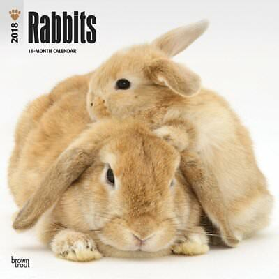 Rabbits Wall Calendar Domestic Pet Animals Monthly Square 12 x 12 Multilingual