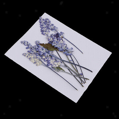10x Pressed Real Dried Flowers Salvia for DIY Floral Arts Crafts Card Making