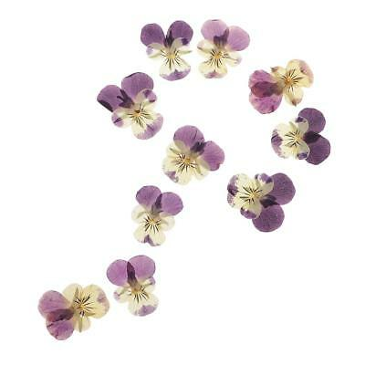 10x Pressed Dried Flower Dry Pansy For Resin Jewelry Crafts DIY Cards Making