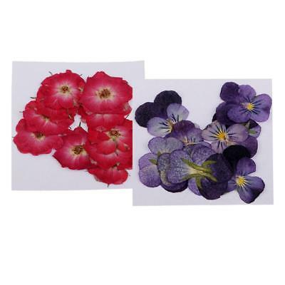 22pcs Pressed Natural Dried Flowers Real Flower Rose Violet for Scrapbooking