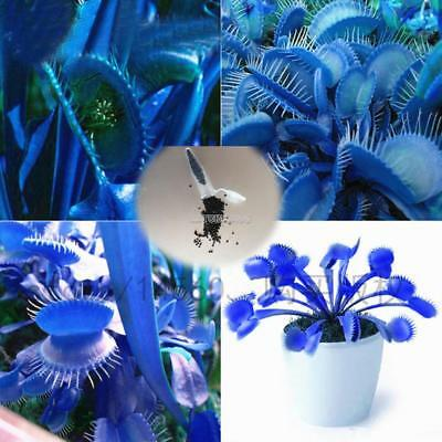 50Pcs Catching Flies Mosquitoes Slurperon Seeds Perennial Potted Plants ER99 02