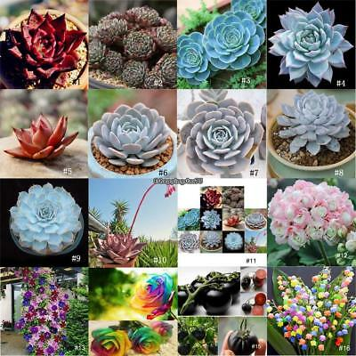 Rare Mixed Flower Fragrant Seeds Rare Succulents Plant for Home Garden Decor
