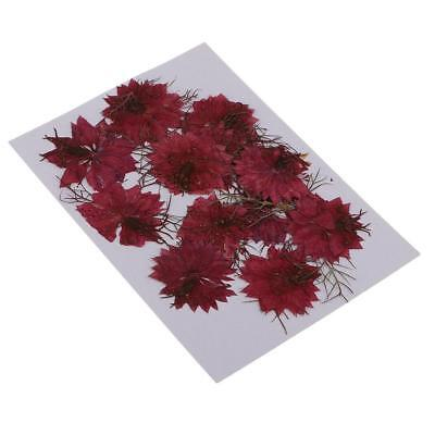 12x Pressed Real Dried Flower Love-in-a-mist for Craft Jewelry Making Red