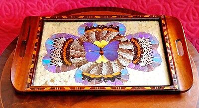 Antique tray made with real butterflies under the glass
