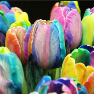 200Pcs Rare Rainbow Tulip Bulbs Seeds Flower Seed Home Garden Decor Plants New