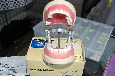 Dental Typodont Model 200 With Removable Teeth Kilgore Nissin Type.