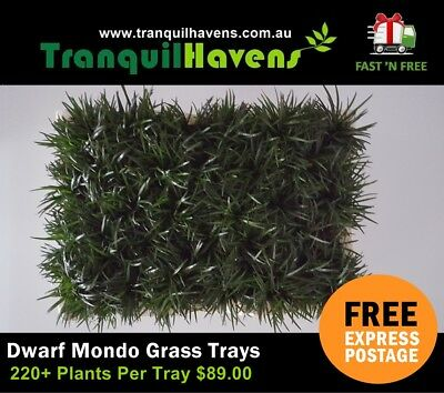 Dwarf Mondo Grass 220+ Plants in a 440mm x 280mm Slab FREE Express Post