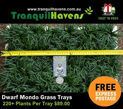 Mini Mondo Grass 220+ Plants in a 440mm x 280mm Slab FREE Express Post