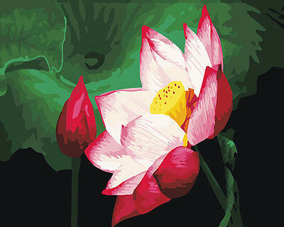 Lotus Flowers 16x20 Paint By Number Kit Diy Acrylic Painting On