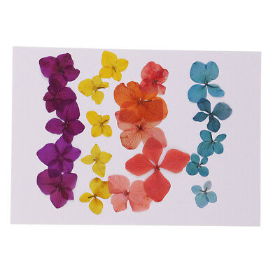 20x Pressed Natural Dried Flowers Hydrangea Embellishment for Candle Making