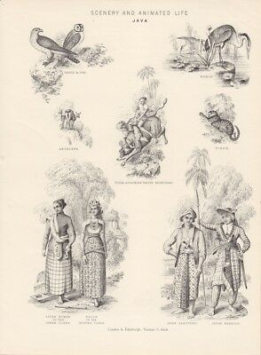 Scenery and animated life Java, Indonesien, Tracht, Kostüm, Holzstich um 1865 mi