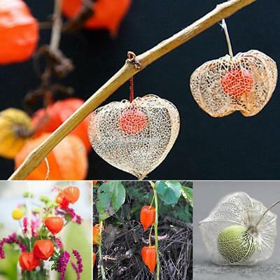 50PCS Lantern Fruit Seeds Perennial Physalis Cape Gooseberry Seeds Garden ZZ