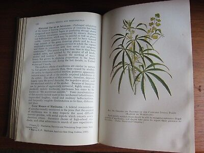 1941  Cannabis ~ Cocaine Pharmacology Book Apothecary Pharmacy Medicine Prints
