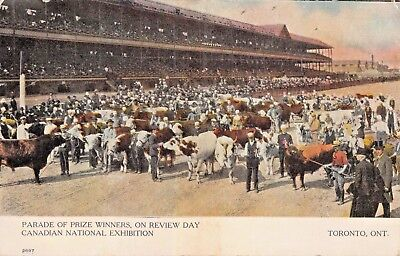 Toronto~Canadian National Exhibition~Cattle Prize Winners~Review Day~Postcard