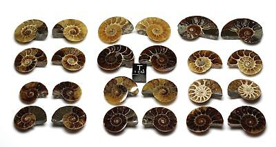Madagascar Ammonite. Cut and Polished matched pairs, Iridescent, Price per pair