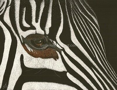 Wildlife Horse Zebra ORIGINAL Scratchboard signed regular board 8.5x11 by LuZimm