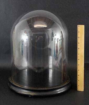 19thC Antique 13.5in tall Glass Dome for Diorama, Dolls, Display, No Reserve