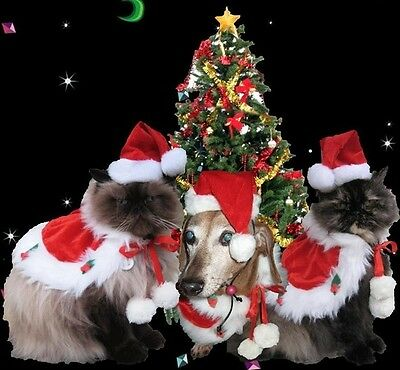Santa hat and cape Jolly St. Nick costume for cats