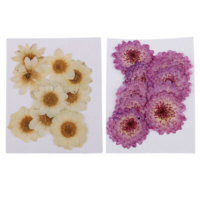 20 Pcs Mixed Pressed Dried Flower Real Press Flowers for Photo Album Decor