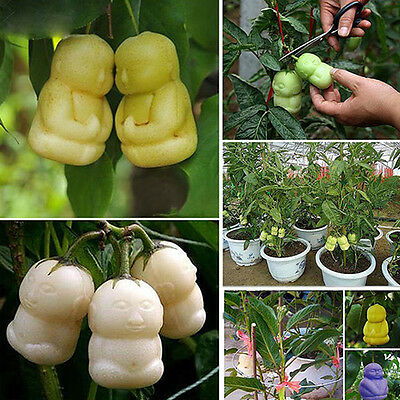 Ne_ 10Pack Rare Delicious Baby Ginseng Fruit Seeds Family Garden Plant Seeds S